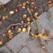 Obstweinlauf
